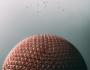 videos para promocionar eventos deportivos